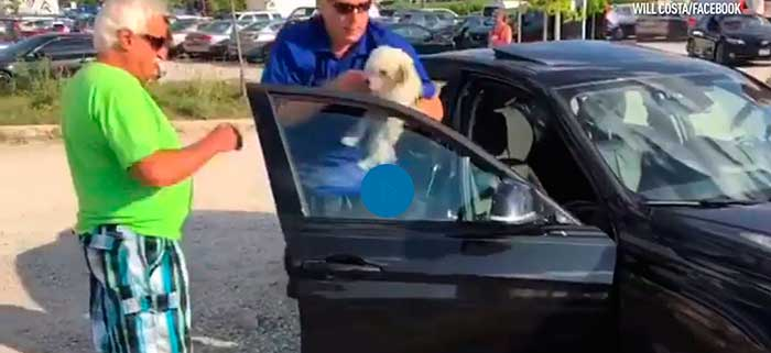 Unbelievable! Watch This Hero Rescue A Small Dog From A Hot Car (Video)