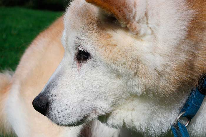 A Heart Breaking Warm Story About Loss & Love Of An Old Dog