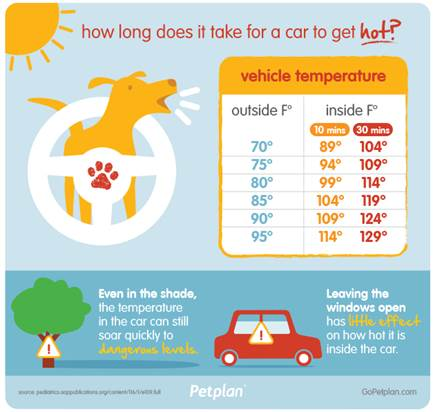 Pet Plan car infographic