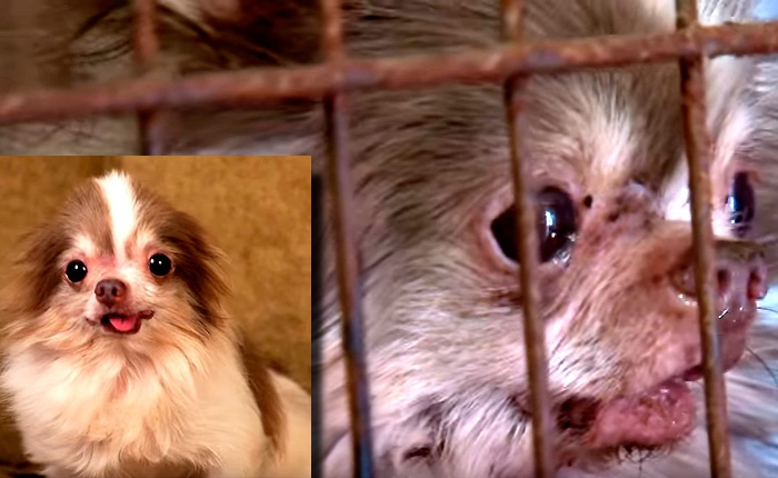 Billy Suffered For So Long HIS CAGE WAS RUSTED SHUT. More Dogs Like Billy Can Be Rescued!!! (Video)