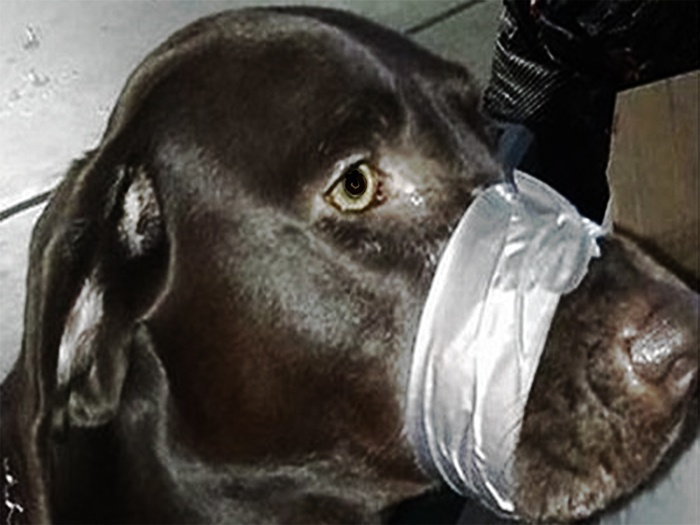 You'll Be Astounded That This Woman Got Her Dog Back After She Duct Taped It's Muzzle (Video)