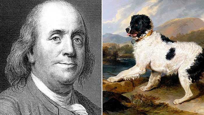 Benjamin Franklin's son had a Newfoundland