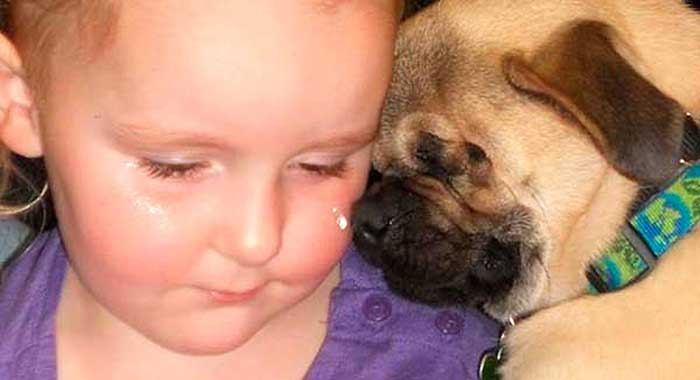 How Does A Pug Born Without Eyes Defy The Odds & Do Such An Important Job?