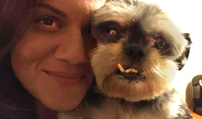 She Was A Puppy Mill Mama & Now, All She Wants Are Human Cuddles (All The Time)