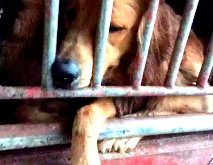 Words Can't Describe These Heroes Who Saved 300 Dogs From Torture & Certain Death (Video)