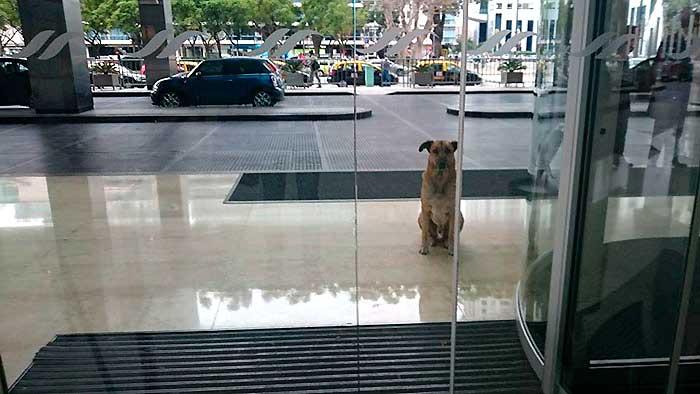 flight-attendant and dog 3