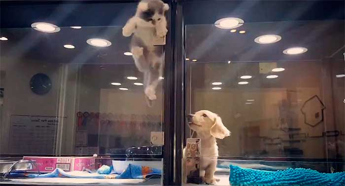 How This Kitten Climbed Over A High Partition To Play With A Lonely Puppy Is Nothing Short Of Magic (Video)