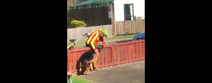 How This Shunned Dog Waits For A Hug From The Mailman Each Morning