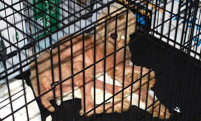Forbidden! Sale Of Dogs From Puppy Mills Banned In Pet Stores
