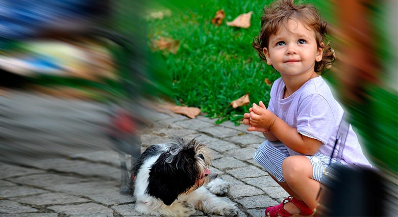 Shocking! The Lovely Sago Palm In Your Garden Can Kill Your Dog Or Toddler (Video)