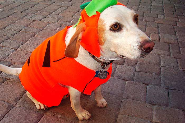 9 Halloween Safety Tips For Dogs